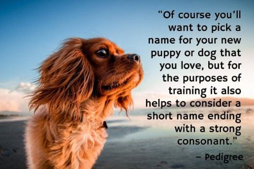 """""""Of course you'll want to pick a name for your new puppy or dog that you love, but for the purposes of training it also helps to consider a short name ending with a strong consonant."""" - Pedigree"""