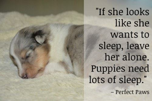 """""""If she looks like she wants to sleep, leave her alone. Puppies need lots of sleep."""" - Perfect Paws"""