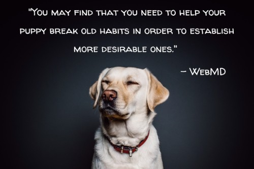 """""""You may find that you need to help your puppy break old habits in order to establish more desirable ones."""" - WebMD"""
