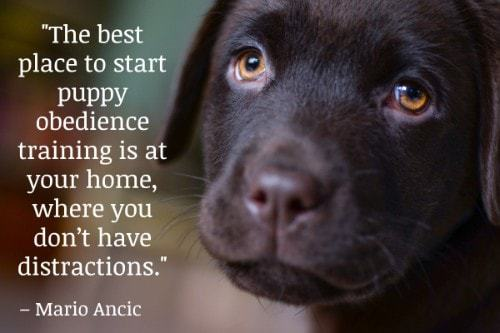 """""""The best place to start puppy obedience training is at your home, where you don't have distractions."""" - Mario Ancic"""
