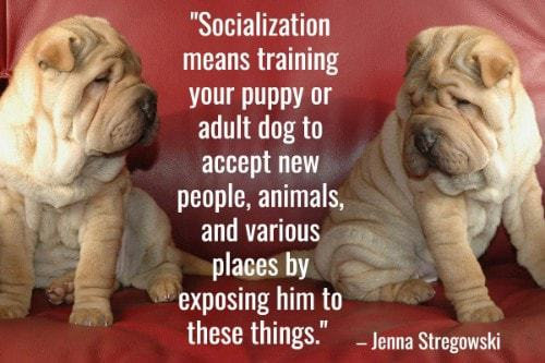 """""""Socialization means training your puppy or adult dog to accept new people, animals, and various places by exposing him to these things."""" - Jenna Stregowski"""