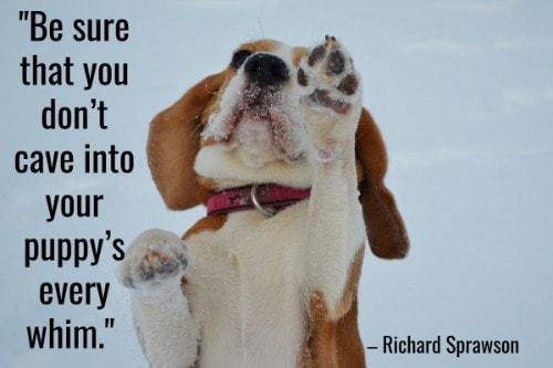 """""""Be sure that you don't cave into your puppy's every whim.""""-Richard Sprawson"""