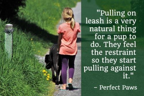 """""""Pulling on leash is a very natural thing for a pup to do. They feel the restraint so they start pulling against it."""" - Perfect Paws"""