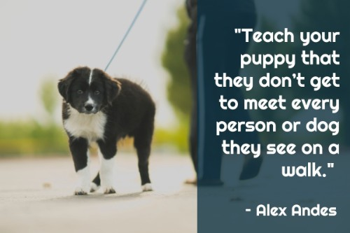"""""""Teach your puppy that they don't get to meet every person or dog they see on a walk."""" - Alex Andes"""