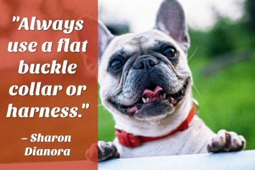 """""""Always use a flat buckle collar or harness."""" - Sharon Dianora"""