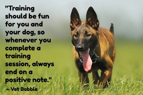 """""""Training should be fun for you and your dog, so whenever you complete a training session, always end on a positive note."""" - Vet Babble"""