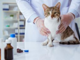 Cat With Vet & Medication