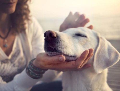 What To Do When Your Dog Has Fleas