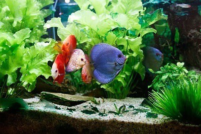 how to clean a fish tank pet life today
