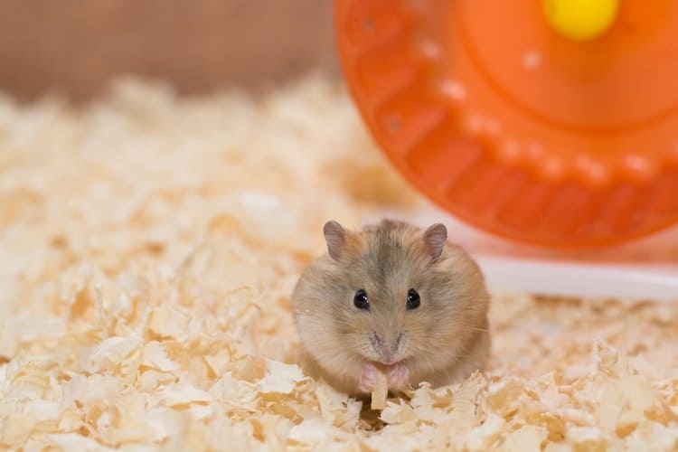 How to Take Care of a Hamster