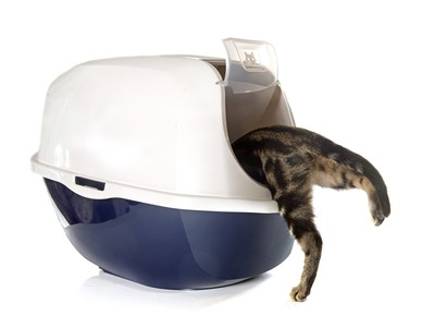 How to teach a cat to use a litter box