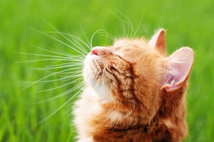How to Prevent Ticks on Cats