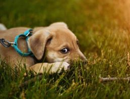 Puppy on grass