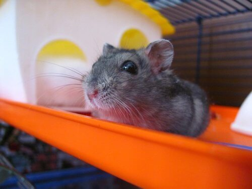 Setting up your hamster's cage