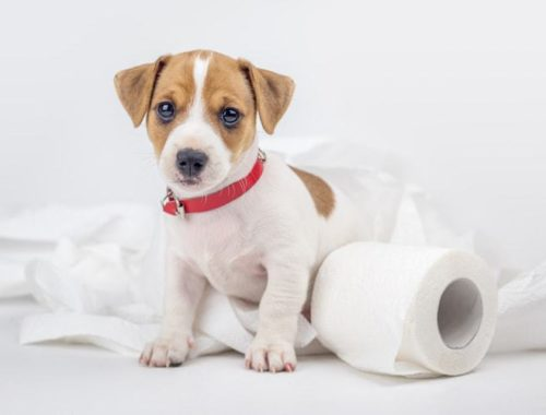 Constipated dog with toilet paper