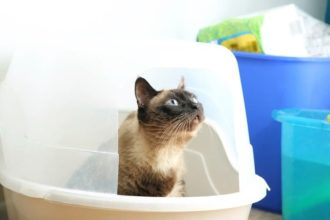 The Best Cat Litter Boxes and Pans