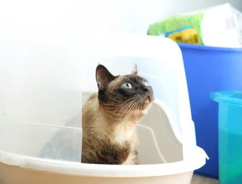 The Best Cat Litter Boxes