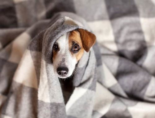 The Best Dog Blankets