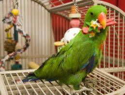 The Best Parrot Cages