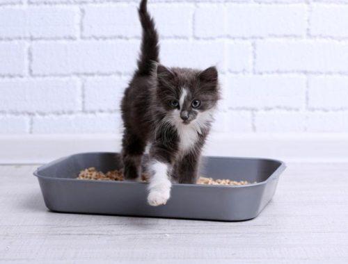 Cat stepping outside of litter box