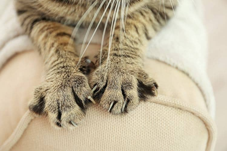 Cat's paws on couch