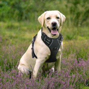 RABBITGOO No Pull Dog Vest