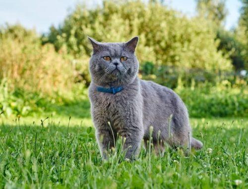 The Best Cat Flea Collars