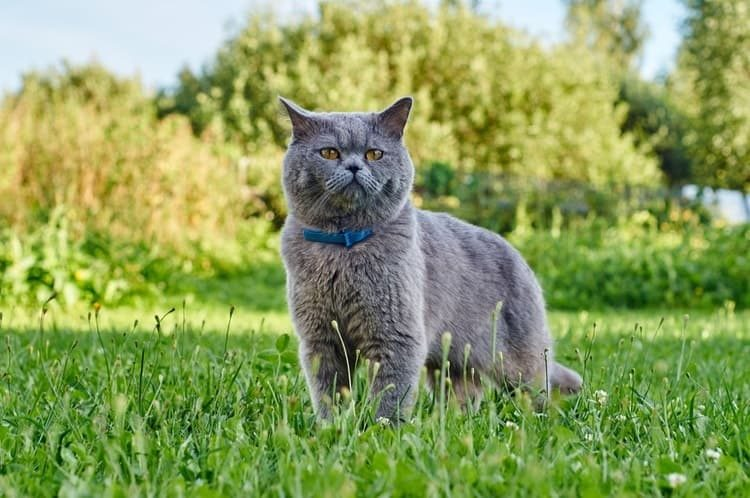 The Best Cat Flea Collars