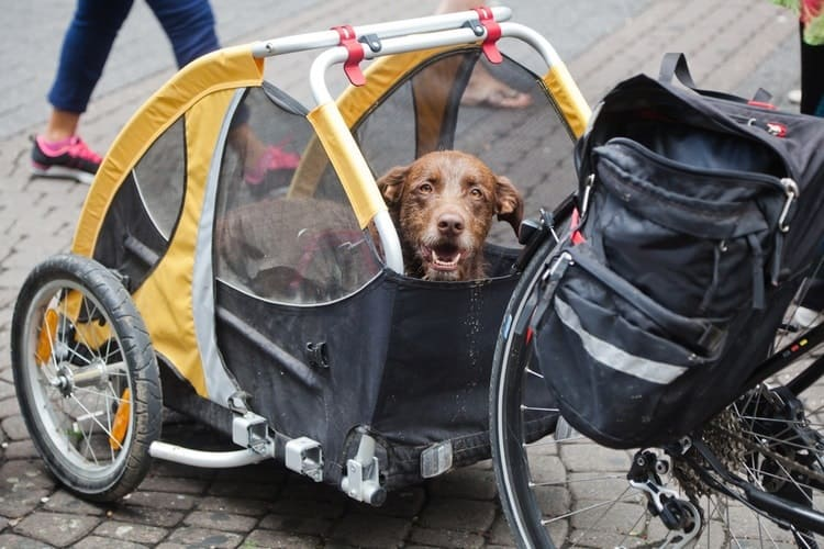 The Top 25 Dog Bike Trailers Of 2019 Pet Life Today