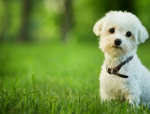 The Best Dog Dewormers