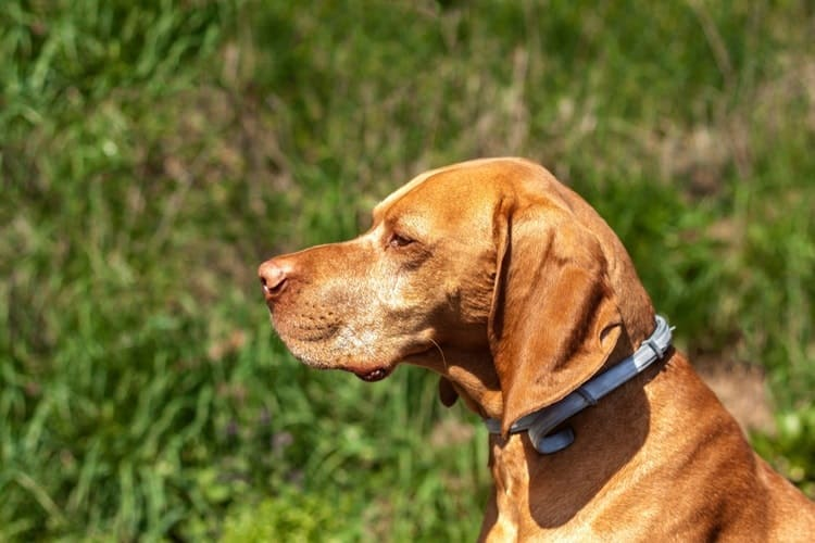 The Best Dog Flea Collars