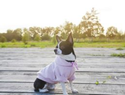 The Best Dog Hoodies