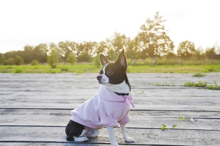 The 25 Best Dog Hoodies Of 2019 Pet Life Today