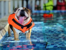 The Best Dog Life Vests
