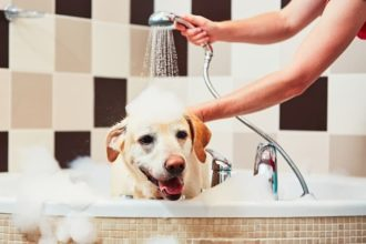 The Best Dog Shampoos