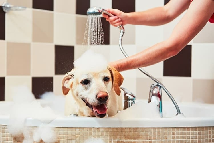 The Best Dog Shampoo