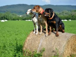 The Best GPS Dog Trackers