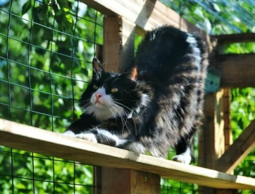 The Best Outdoor Cat Houses Of 2021 Pet Life Today