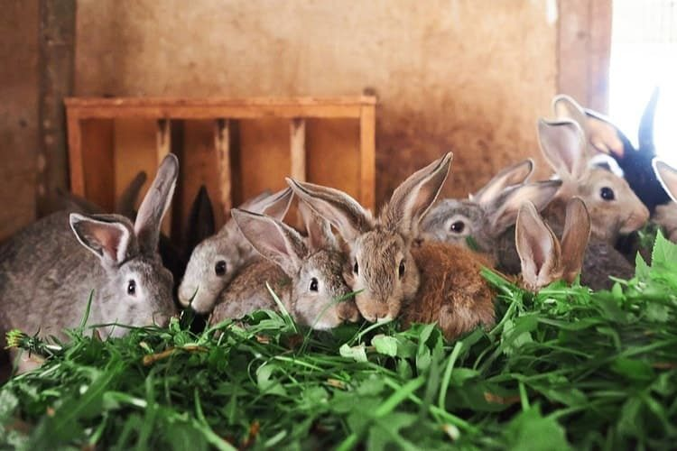 The Best Outdoor Rabbit Hutches