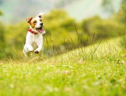 The Best Wireless Dog Fences