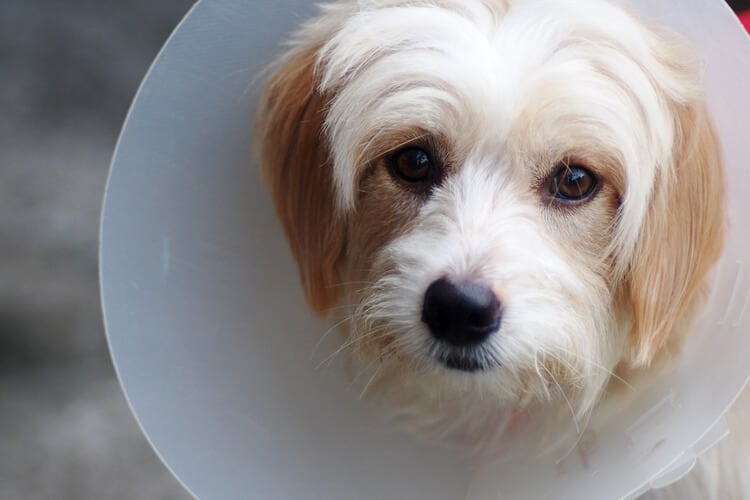 Dog with cone on head
