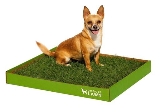DoggieLawn Disposable Dog Potty
