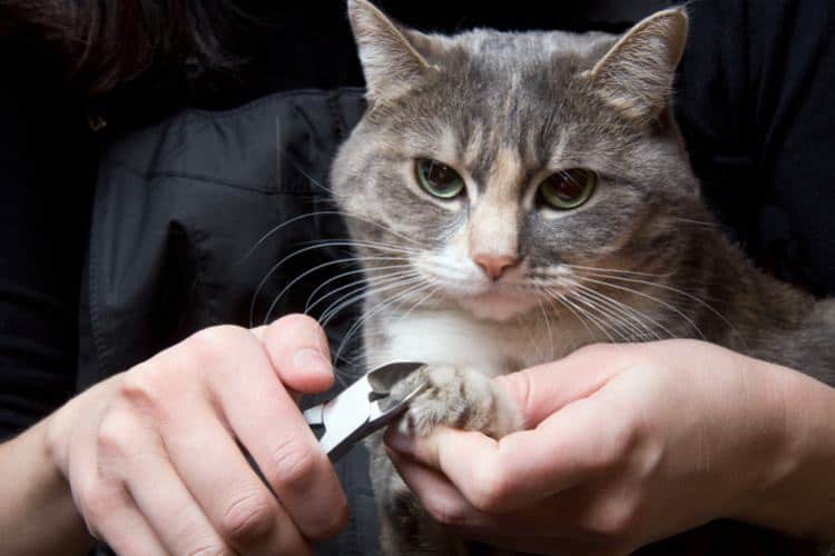Person trimming a cat's nails