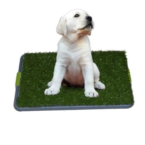 Sonnyridge Easy Dog Potty Training System