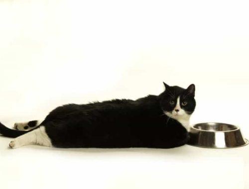 The Best Diet Cat Food