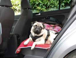 The Best Dog Car Seats & Booster Seats