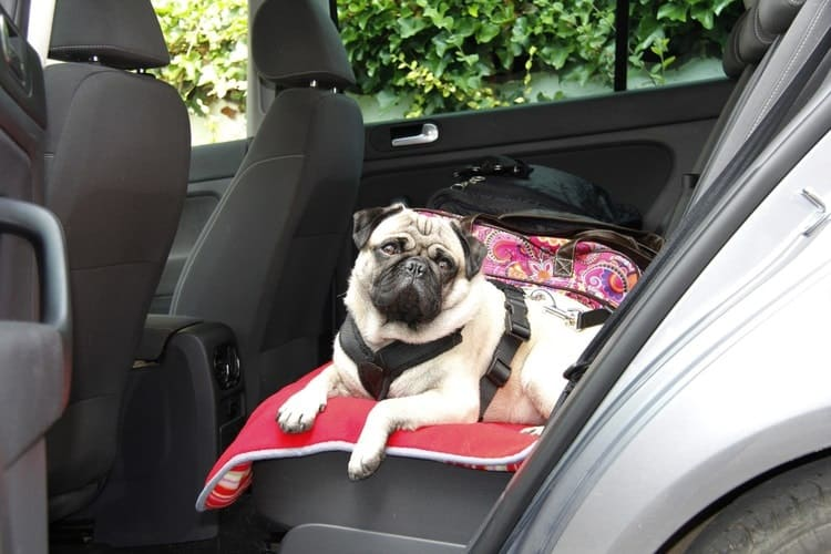Excellent The 25 Best Dog Car Seats Booster Seats Of 2019 Pet Life Caraccident5 Cool Chair Designs And Ideas Caraccident5Info