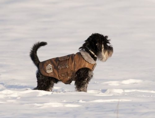 The Best Dog Winter Coats