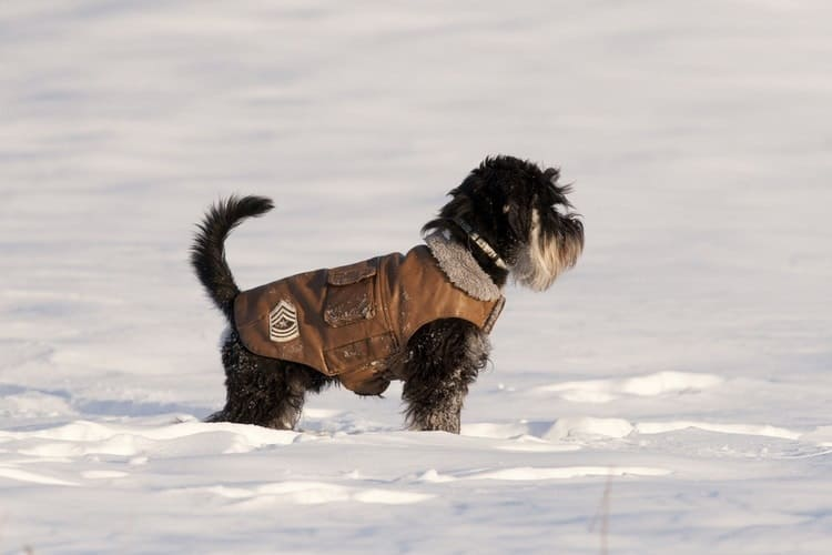 The 25 Best Dog Winter Coats Of 2019 Pet Life Today