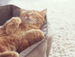 The Best Heated Cat Beds
